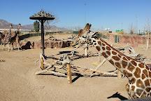 El Paso Zoo, El Paso, United States