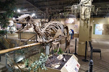 Glendive Dinosaur & Fossil Museum, Glendive, United States