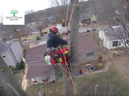Tree Service Ruckersville VA