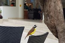 Xaman Ha Aviary, Playa del Carmen, Mexico