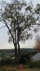 Treeletics Baumpflege