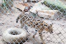 Tiger World, Rockwell, United States
