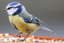Brereton Heath Local Nature Reserve, Sandbach, United Kingdom