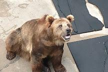 Cherokee Bear Zoo and Exotic Animals, Cherokee, United States