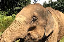 Mae Wang Elephant Camp, Mae Wang, Thailand