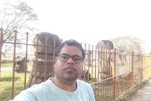 Kachari Ruins, Dimapur, India