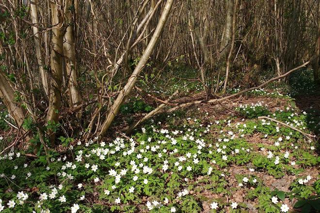 Bradfield Woods, Bury St. Edmunds, United Kingdom