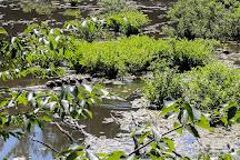 Jug Bay Wetlands Sanctuary, Lothian, United States