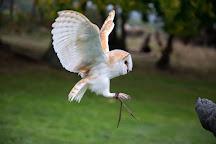 Sky Bird Of Prey Display Team, Southborough, United Kingdom