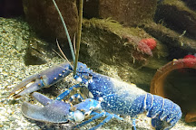 Ilfracombe Aquarium, Ilfracombe, United Kingdom