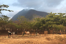 Maui Animal Farm, Lahaina, United States
