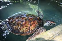Galbokka Sea Turtle Hatchery, Kosgoda, Sri Lanka