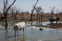 Lake Ngami, Ngamiland East, Botswana