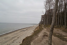 Gespensterwald, Mecklenburg-West Pomerania, Germany