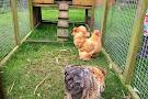 Ark Open Farm