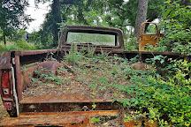 Roadside Rusted Ford Trucks, Crawfordville, United States
