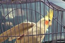Charity Birds Hospital, New Delhi, India