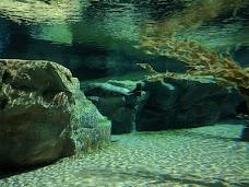 Kovler Sea Lion Pool chicago USA
