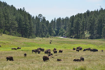 Custer State Park, Custer, United States