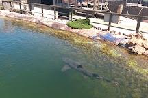 Ocean Park Aquarium, Denham, Australia