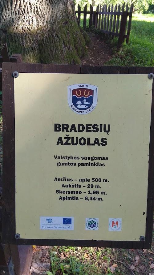Bradesiai oak