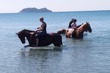 Happy Horses, Zakynthos, Greece