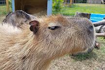 Amazing Animals Inc, Saint Cloud, United States