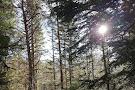 Selva de Oza