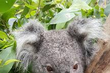 Friends of the Koala, Lismore, Australia