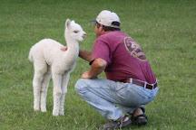 Painted Sky Alpaca Farm & Fiber Mill, Earleville, United States