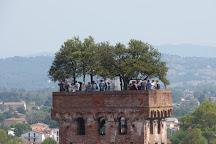 Torre Guinigi, Lucca, Italy
