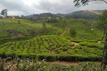Kerala Farm, Munnar, India