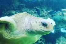 SeaWorld, Orlando, United States