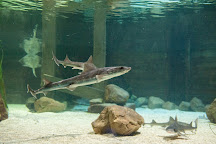 St Andrews Aquarium, St. Andrews, United Kingdom