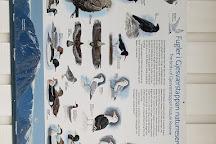 Bird Safari, Gjesvaer, Norway