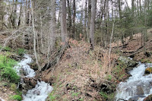 Monongahela National Forest, Elkins, United States