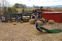 Sunflower Farm, Longmont, United States