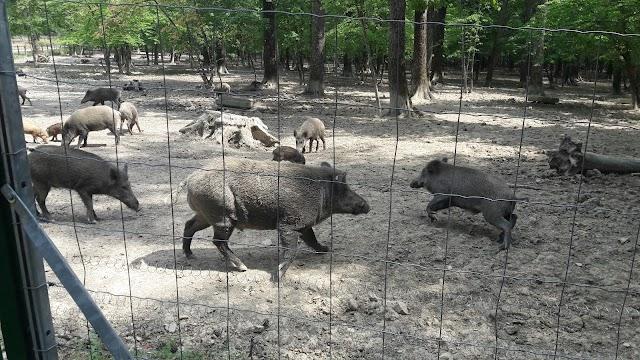 Parc animalier La Bannie