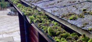 Local Gutter and Roof Cleaning Service