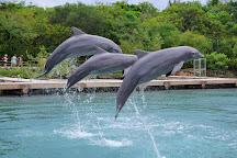 Dolphinaris Cancun, Cancun, Mexico