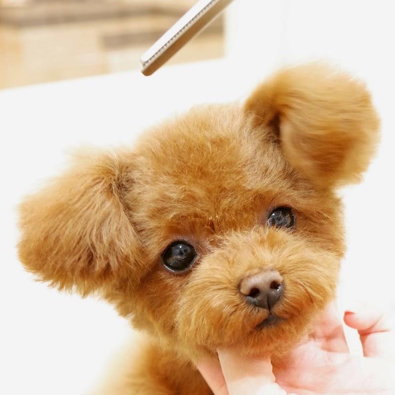 Doggie-Do 白金台店