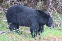 Gastineau Guiding, Juneau, United States