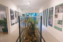 Tamborine Rainforest Skywalk, Tamborine Mountain, Australia