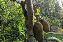 Muoi Cuong Cocoa Farm, Can Tho, Vietnam