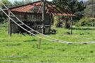 Howletts Wild Animal Park