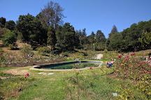 Morcom Amphitheater of Roses, Oakland, United States