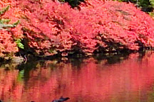 Pond Shirakoma, Sakuho-machi, Japan