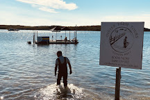 Oyster Farm Tours - Coffin Bay, Coffin Bay, Australia