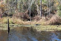 Pocosin Lakes National Wildlife Refuge, Columbia, United States