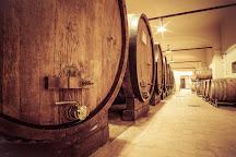 Langa Wine Tour, Alba, Italy